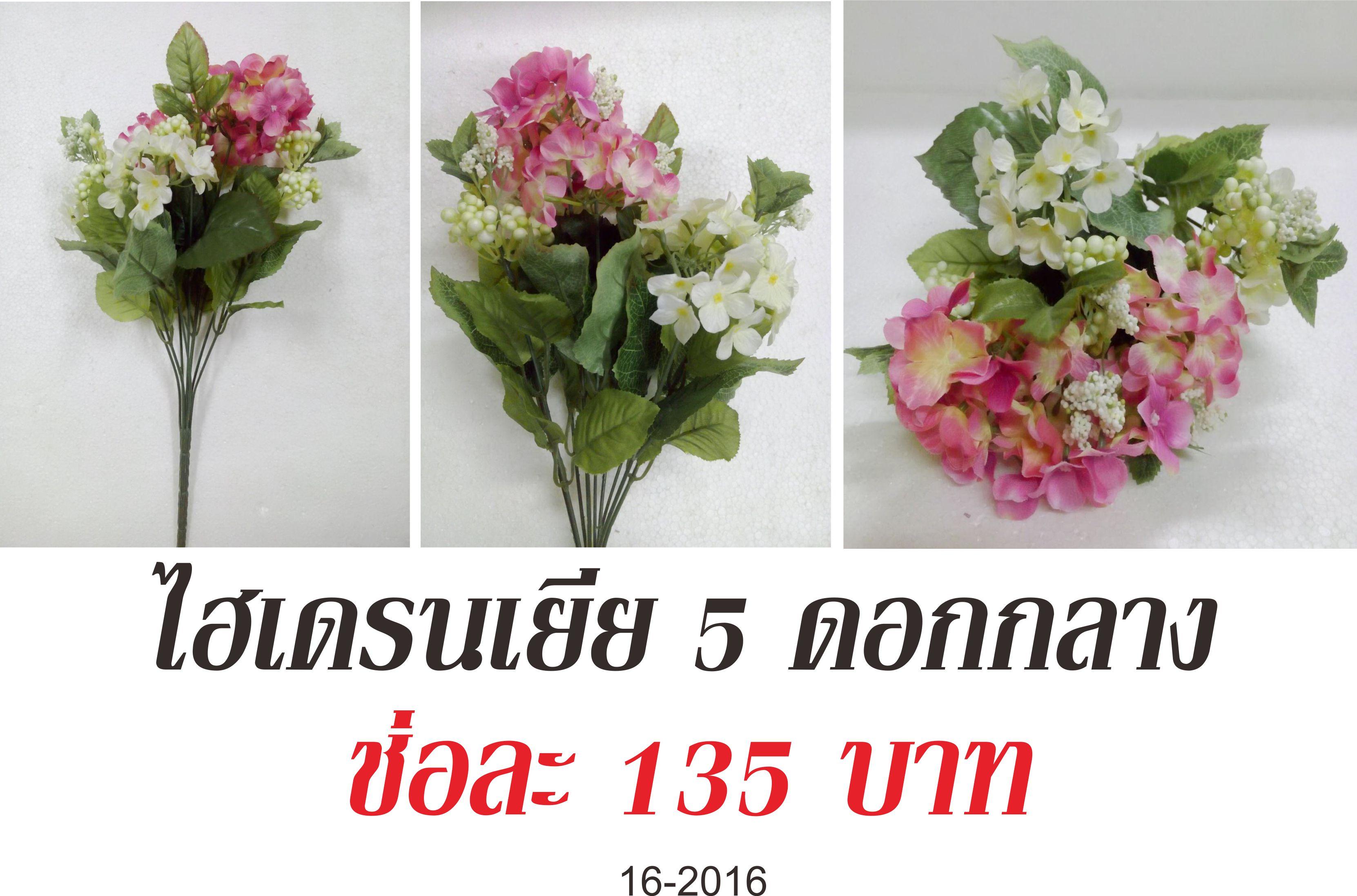ไฮเดรนเยีย 5 ดอกกลาง