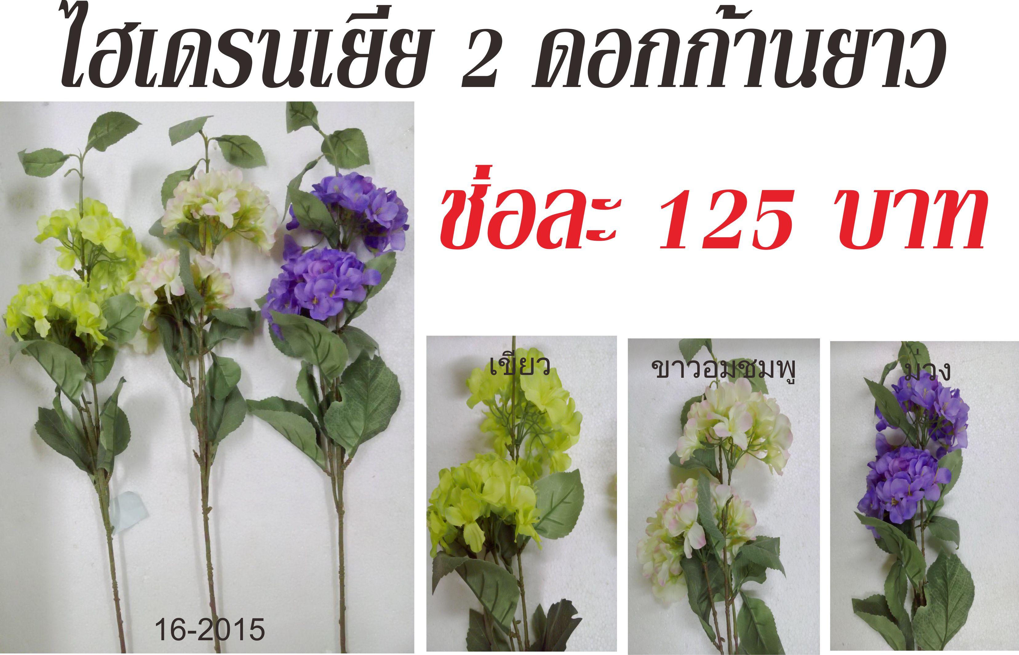 ไฮเดรนเยีย 2 ดอก ก้านยาว