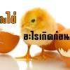 ไก่กับไข่ อะไรเกิดก่อนกัน??