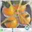 เค้กส้มแพ็ค 4 ชิ้น thumbnail 4